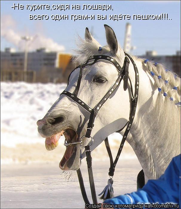 Котоматрица: -Не курите,сидя на лошади,  всего один грам-и вы идёте пешком!!!..