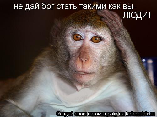 Котоматрица: не дай бог стать такими как вы- ЛЮДИ!
