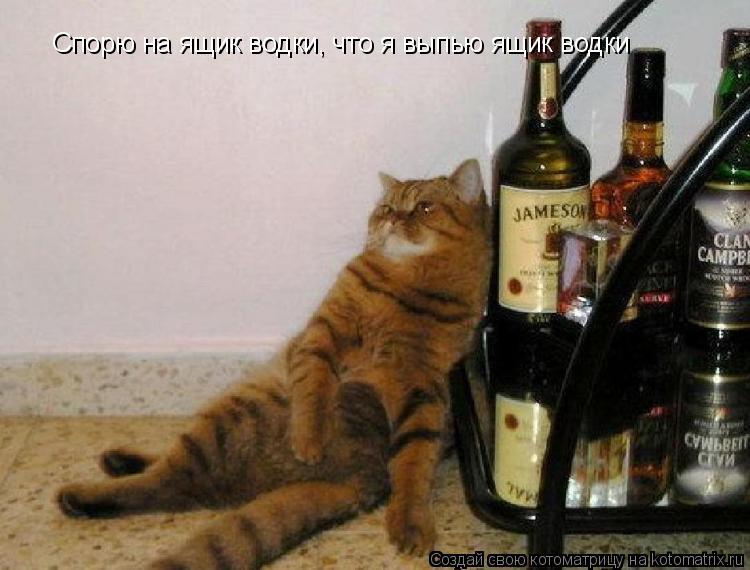 Котоматрица: Спорю на ящик водки, что я выпью ящик водки