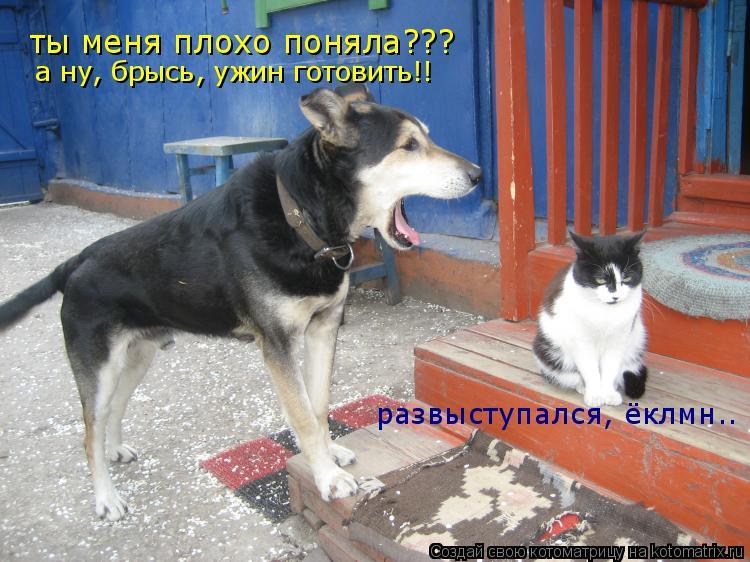 Котоматрица: ты меня плохо поняла??? а ну, брысь, ужин готовить!! развыступался, ёклмн..