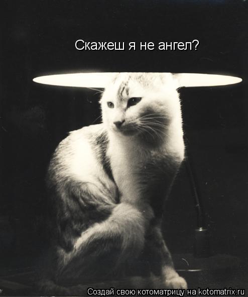 Котоматрица: Скажеш я не ангел?