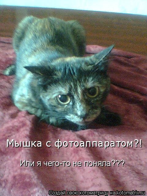 Котоматрица: Мышка с фотоаппаратом?! Или я чего-то не поняла???