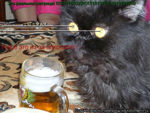 Котоматрица: Это реальная матрица! 010101010101010101010101010101010 ____________________ ____________________________ И все это из-за алкоголя!!! -