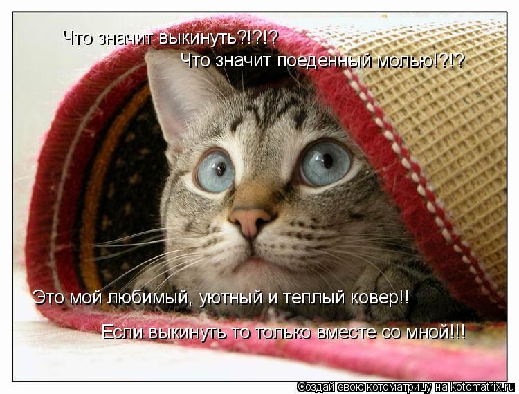 Котоматрица: Что значит выкинуть?!?!? Что значит поеденный молью!?!? Это мой любимый, уютный и теплый ковер!! Если выкинуть то только вместе со мной!!!