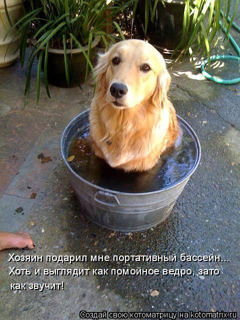 Котоматрица: Хозяин подарил мне портативный бассейн... Хоть и выглядит как помойное ведро, зато как звучит!
