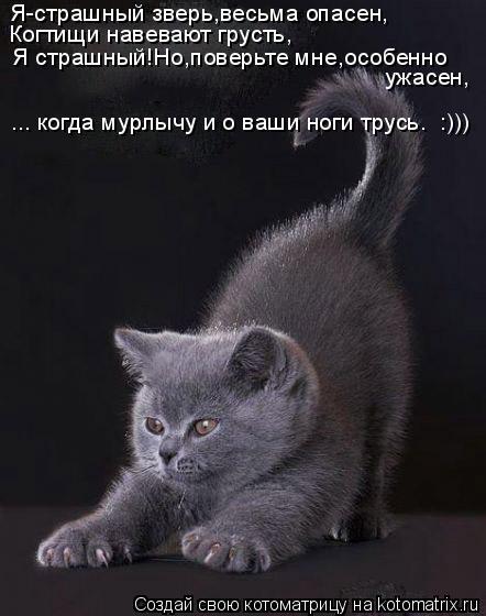 Котоматрица: Я-страшный зверь,весьма опасен, Когтищи навевают грусть, Я страшный!Но,поверьте мне,особенно  ужасен,  ... когда мурлычу и о ваши ноги трусь.  :)