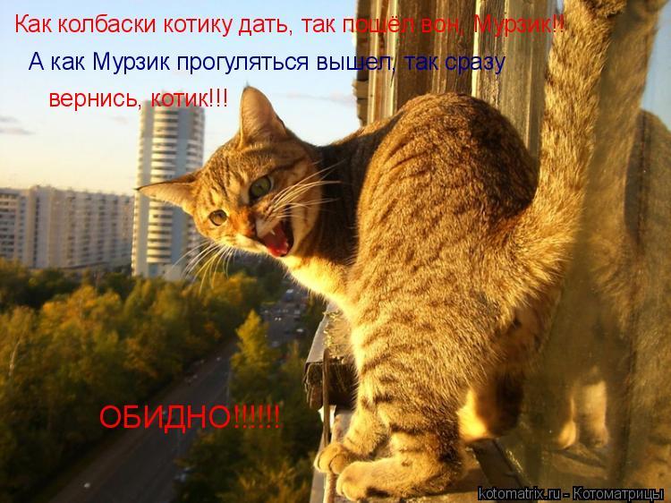Котоматрица: Как колбаски котику дать, так пошёл вон, Мурзик!! А как Мурзик прогуляться вышел, так сразу вернись, котик!!! ОБИДНО!!!!!!
