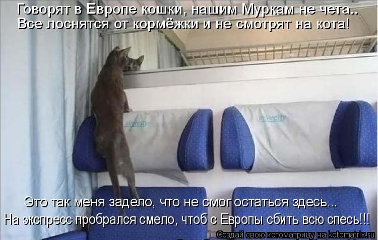 Котоматрица: Говорят в Европе кошки, нашим Муркам не чета.. Все лоснятся от кормёжки и не смотрят на кота! Это так меня задело, что не смог остаться здесь...