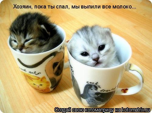 Котоматрица: Хозяин, пока ты спал, мы выпили все молоко...