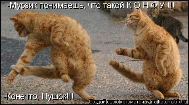 Котоматрица: -Мурзик понимаешь, что такой К О Н Ф У !!! -Конечто, Пушок!!!