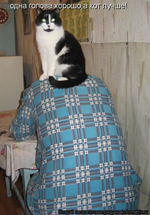 Котоматрица: одна голова хорошо,а кот лучше!