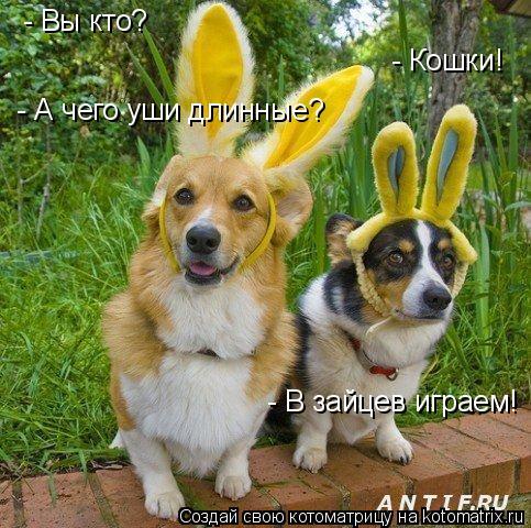 Котоматрица: - Вы кто? - Кошки! - А чего уши длинные? - В зайцев играем!