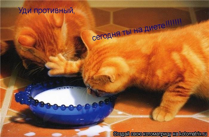 Котоматрица: Уди противный,   сегодня ты на диете   !!!!!!!