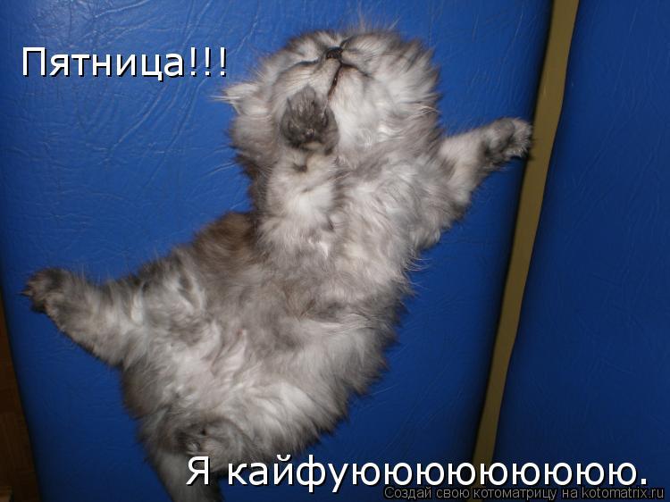 Котоматрица: Пятница!!!  Я кайфуююююююююю.