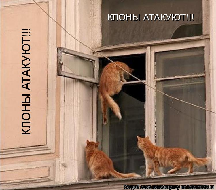 Котоматрица: КЛОНЫ АТАКУЮТ!!! КЛОНЫ АТАКУЮТ!!!