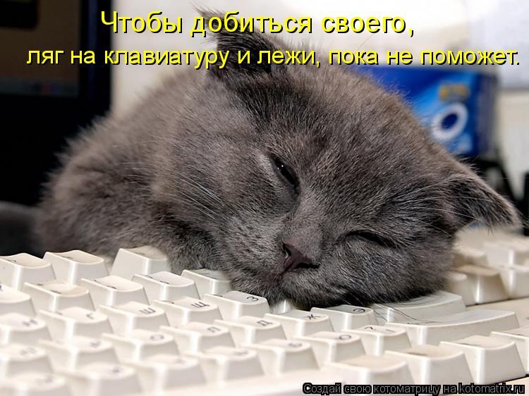 Котоматрица: Чтобы добиться своего,  ляг на клавиатуру и лежи, пока не поможет.