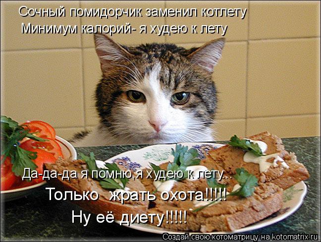 Всем привет.  Поздравляю вас с первым Днем весны и с Днем котов!