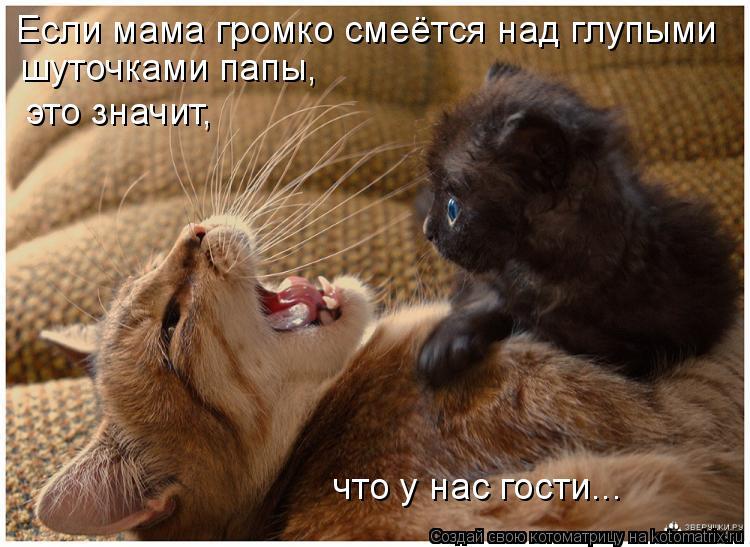 Котоматрица: Если мама громко смеётся над глупыми  шуточками папы, это значит, что у нас гости...