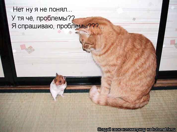 Котоматрица: Нет ну я не понял... У тя чё, проблемы?? Я спрашиваю, проблемы???...