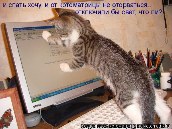 Котоматрица: отключили бы свет, что ли?... и спать хочу, и от котоматрицы не оторваться...