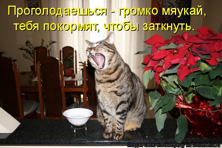 Котоматрица: Проголодаешься - громко мяукай,  тебя покормят, чтобы заткнуть.