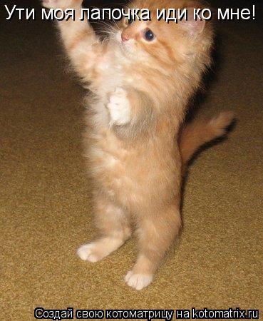 Котоматрица: Ути моя лапочка иди ко мне! Ути моя лапочка иди ко мне!