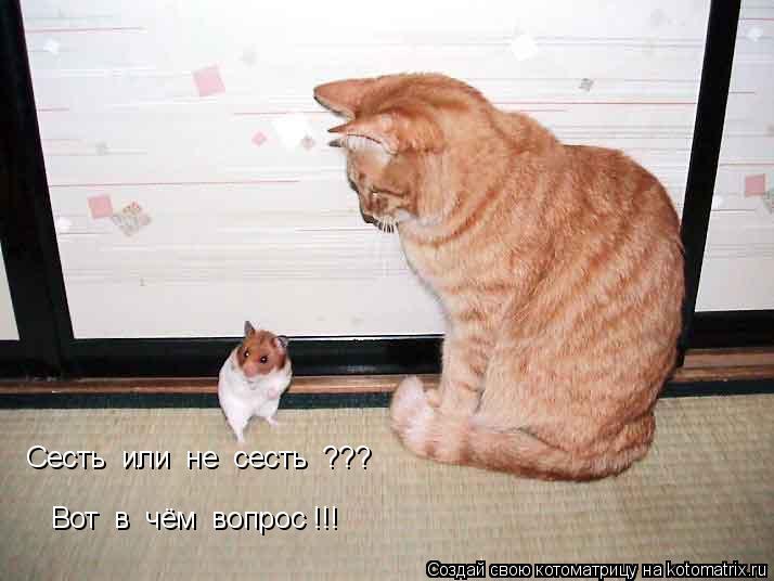 Котоматрица: Cесть  или  не  сесть  ??? Вот  в  чём  вопрос !!!