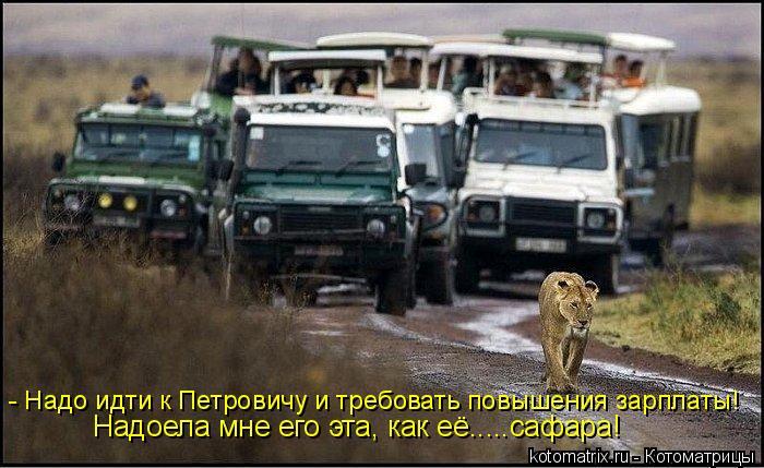 Котоматрица: - Надо идти к Петровичу и требовать повышения зарплаты! Надоела мне его эта, как её.....сафара!