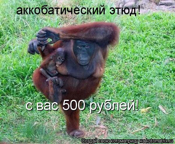 Котоматрица: аккобатический этюд! с вас 500 рублей!