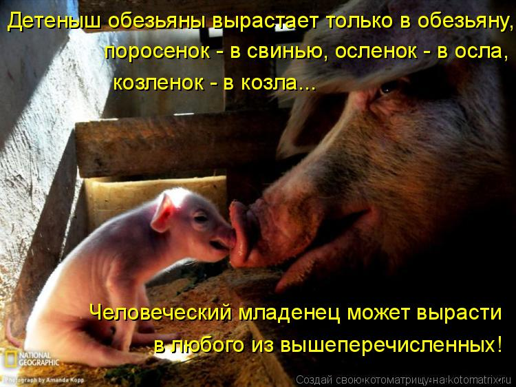 Котоматрица: Детеныш обезьяны вырастает только в обезьяну,  поросенок - в свинью, осленок - в осла,  козленок - в козла...  Человеческий младенец может вырас