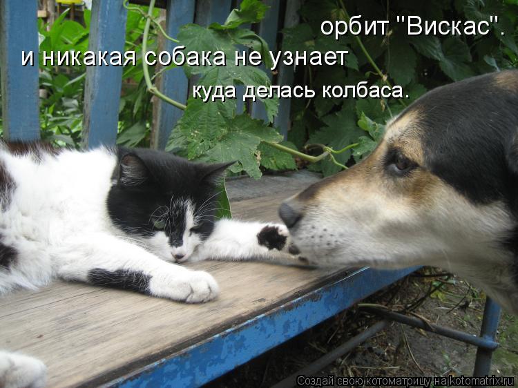 кто умнее кошки или собаки людей нашей стране