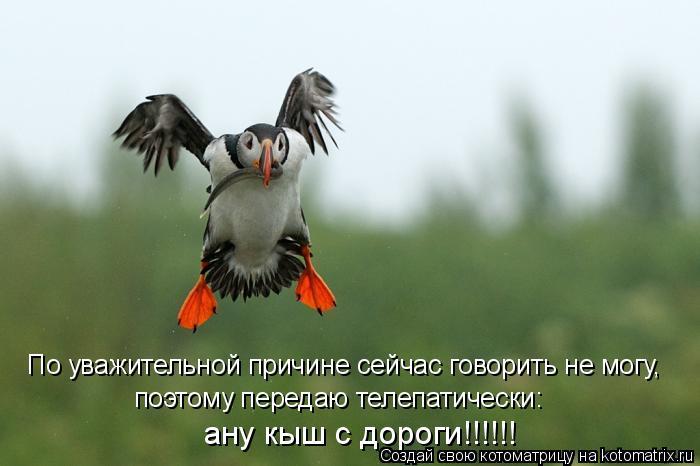 Котоматрица: По уважительной причине сейчас говорить не могу,  поэтому передаю телепатически: ану кыш с дороги!!!!!!