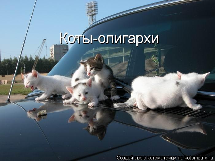 Котоматрица: Коты-олигархи