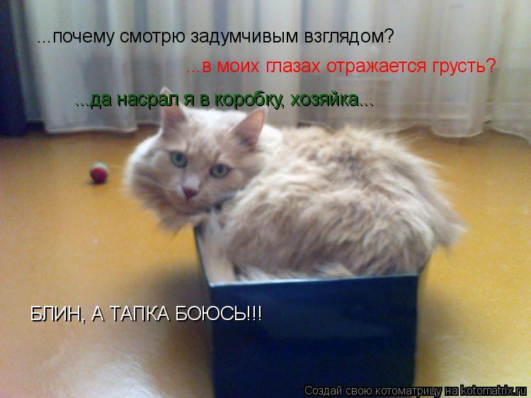 Котоматрица: ...почему смотрю задумчивым взглядом? ...в моих глазах отражается грусть? ...да насрал я в коробку, хозяйка... БЛИН, А ТАПКА БОЮСЬ!!!