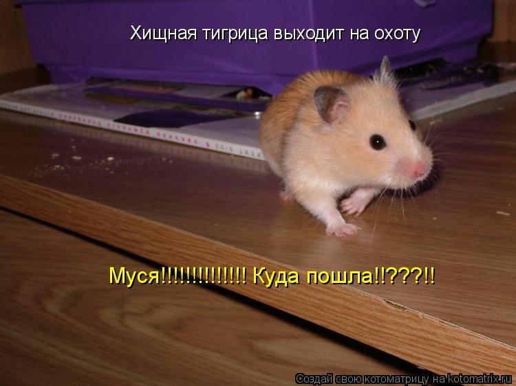 Котоматрица: Хищная тигрица выходит на охоту Муся!!!!!!!!!!!!!! Куда пошла!!???!!