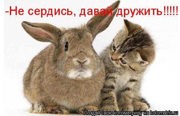 Котоматрица: -Не сердись, давай дружить!!!!!