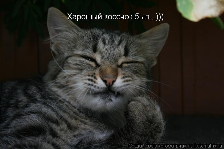 Котоматрица: Харошый косечок был...)))