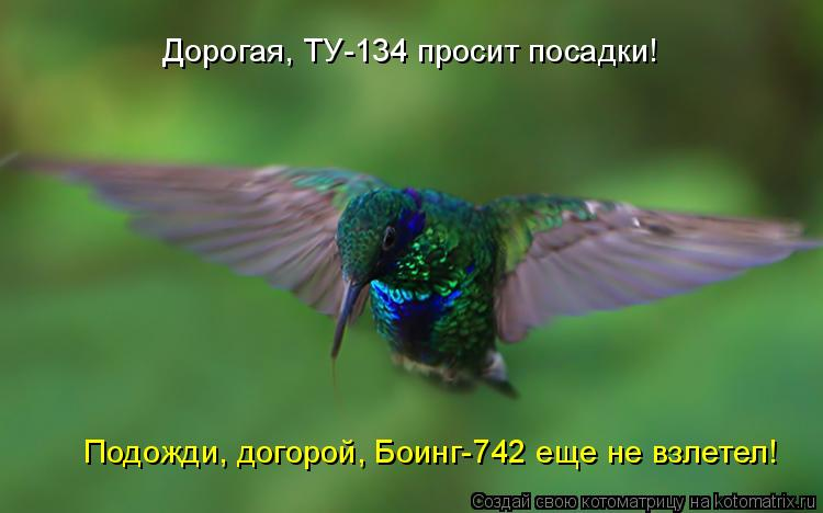 Котоматрица: Дорогая, ТУ-134 просит посадки! Подожди, догорой, Боинг-742 еще не взлетел!