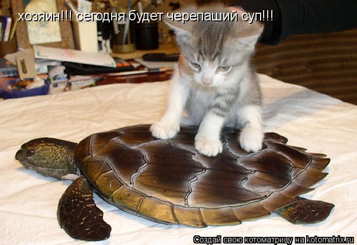 детское выражение как бог черепаху для детей Термобелье