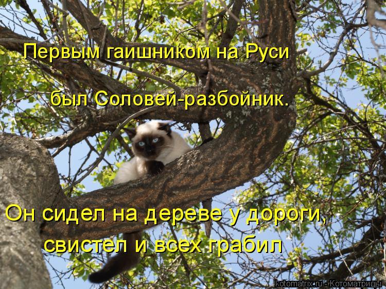 Котоматрица: Первым гаишником на Руси  был Соловей-разбойник.  Он сидел на дереве у дороги, свистел и всех грабил