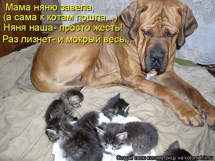 Котоматрица: Мама няню завела,  (а сама к котам пошла...) Няня наша- просто жесть! Раз лизнет- и мокрый весь...