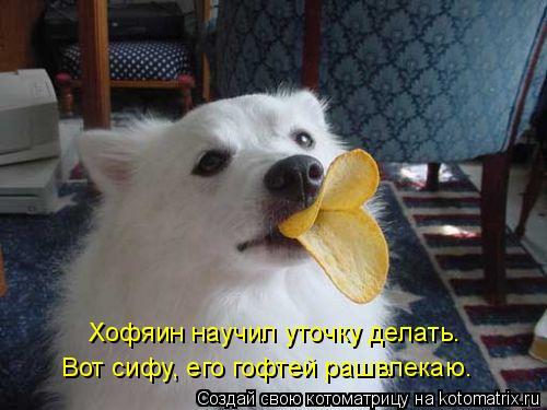 Котоматрица: Хофяин научил уточку делать. Вот сифу, его гофтей рашвлекаю.