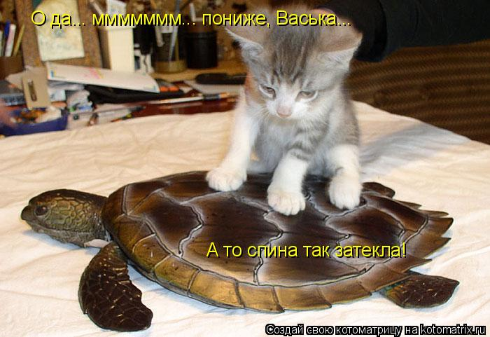Котоматрица: О да... ммммммм... пониже, Васька... А то спина так затекла!
