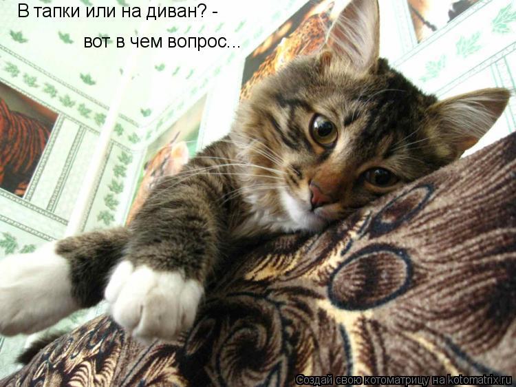 Котоматрица: В тапки или на диван? -  вот в чем вопрос...