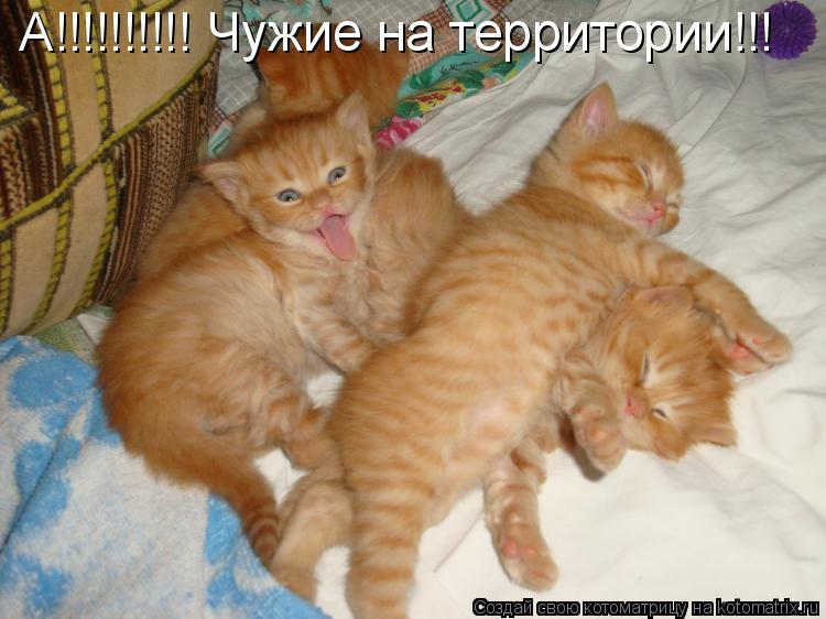 Котоматрица: А!!!!!!!!!! Чужие на территории!!!