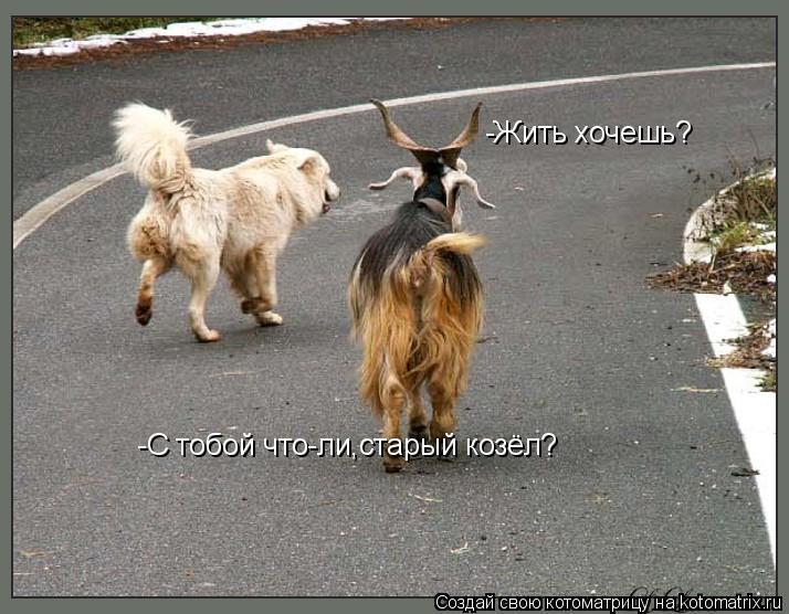 Котоматрица: -Жить хочешь?  -С тобой что-ли,старый козёл?