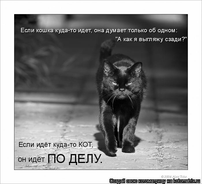 """Котоматрица: Если кошка куда-то идет, она думает только об одном: """"А как я выгляжу сзади?"""" Если идёт куда-то КОТ, он идёт ПО ДЕЛУ."""