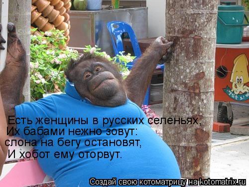 Котоматрица: Есть женщины в русских селеньях, Их бабами нежно зовут:  слона на бегу остановят,  И хобот ему оторвут.