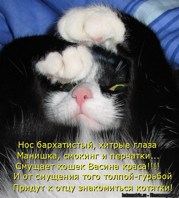 Котоматрица: Нос бархатистый, хитрые глаза Манишка, смокинг и перчатки... Смущает кошек Васина краса!!!! Придут к отцу знакомиться котятки! И от смущения т