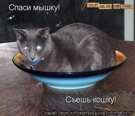 Котоматрица: Спаси мышку! Cъешь кошку!
